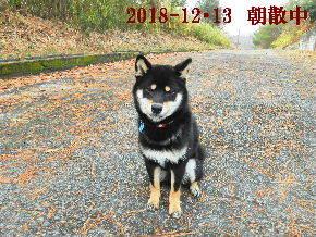 2018-12・13 今日の麻呂 (3).JPG