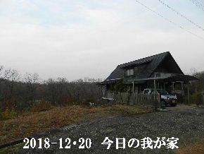 2018-12・20 今日の里山は・・・ (1).JPG