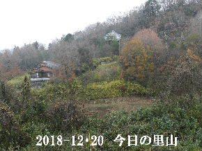 2018-12・20 今日の里山は・・・ (4).JPG