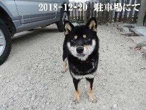 2018-12・20 今日の麻呂 (5).JPG