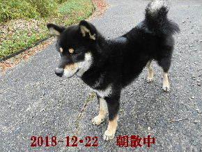 2018-12・22 今日の麻呂 (3).JPG