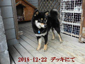 2018-12・22 今日の麻呂 (6).JPG