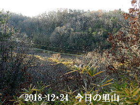 2018-12・24 今日の里山は・・・ (3).JPG