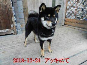 2018-12・24 今日の麻呂 (6).JPG