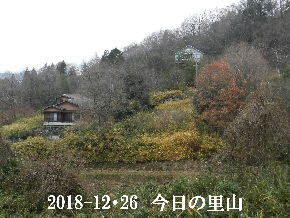 2018-12・26 今日の里山は・・・ (4).JPG