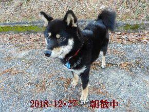 2018-12・27 今日の麻呂 (2).JPG