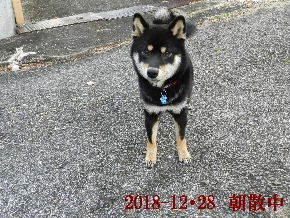 2018-12・28 今日の麻呂 (1).JPG