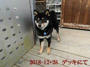 2018-12・28 今日の麻呂 (6).JPG