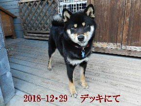 2018-12・29 今日の麻呂 (5).JPG
