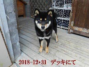 2018-12・31 今日の麻呂 (8).JPG