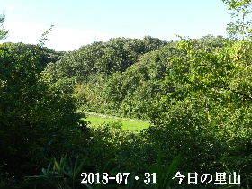 20185-07・31 今日の里山は・・・ (3).JPG