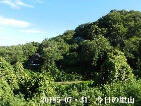 20185-07・31 今日の里山は・・・ (4).JPG