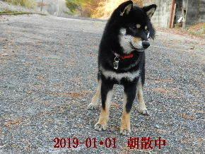 2019-01・01 今日の麻呂 (2).JPG