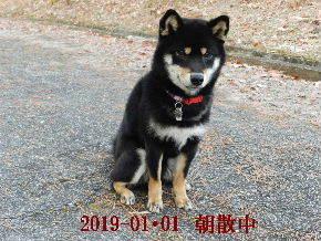 2019-01・01 今日の麻呂 (3).JPG