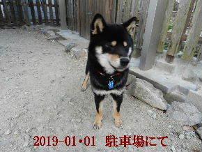 2019-01・01 今日の麻呂 (5).JPG