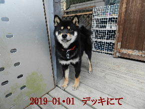 2019-01・01 今日の麻呂 (7).JPG