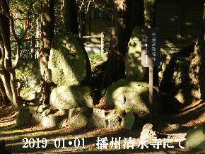 2019-01・01 我が家の初詣で (3).JPG