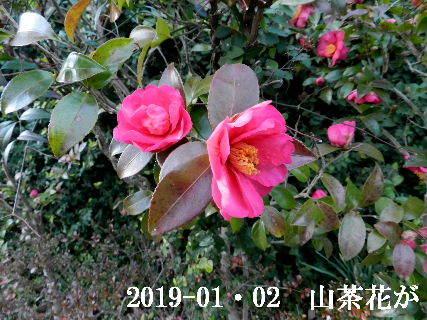 2019-01・02 今日の出遭い (1).JPG
