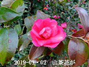 2019-01・02 今日の出遭い (2).JPG