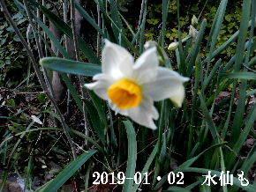 2019-01・02 今日の出遭い (3).JPG