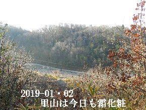 2019-01・02 今日の里山は・・・ (3).JPG