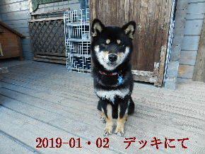 2019-01・02 今日の麻呂 (10).JPG
