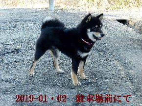 2019-01・02 今日の麻呂 (4).JPG