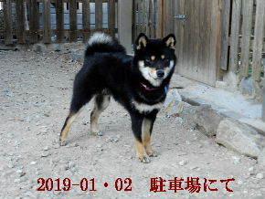 2019-01・02 今日の麻呂 (5).JPG