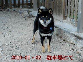 2019-01・02 今日の麻呂 (6).JPG