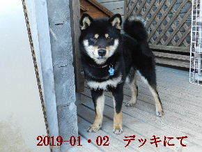 2019-01・02 今日の麻呂 (8).JPG