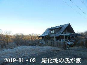 2019-01・03 今日の里山は・・・ (1).JPG
