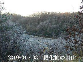 2019-01・03 今日の里山は・・・ (3).JPG