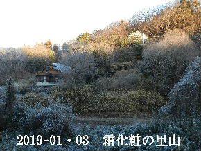 2019-01・03 今日の里山は・・・ (4).JPG