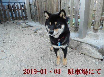 2019-01・03 今日の麻呂 (3).JPG