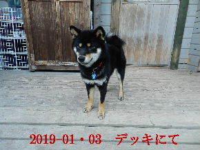 2019-01・03 今日の麻呂 (5).JPG