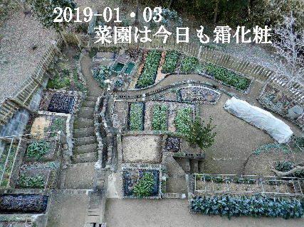 2019-01・03 我が家のスナップ・・・ (1).JPG