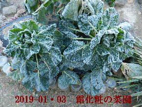 2019-01・03 我が家のスナップ・・・ (3).JPG