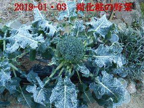 2019-01・03 我が家のスナップ・・・ (6).JPG