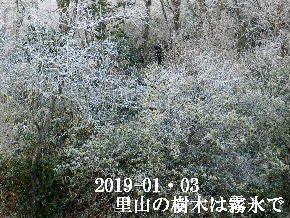 2019-01・03 霜化粧の里山 (1).JPG