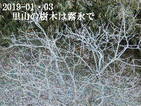 2019-01・03 霜化粧の里山 (2).JPG