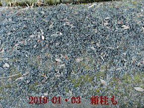 2019-01・03 霜化粧の里山 (4).JPG