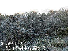 2019-01・03 霜化粧の里山 (6).JPG
