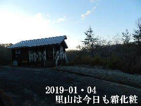 2019-01・04 今日の里山は・・・ (2).JPG