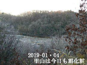 2019-01・04 今日の里山は・・・ (3).JPG