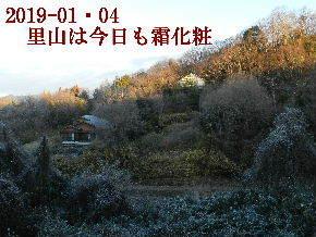 2019-01・04 今日の里山は・・・ (4).JPG