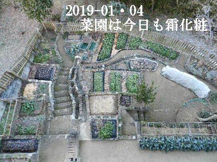 2019-01・04 今日の里山模様 (1).JPG