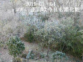 2019-01・04 今日の里山模様 (2).JPG