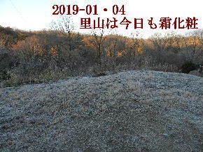 2019-01・04 今日の里山模様 (3).JPG