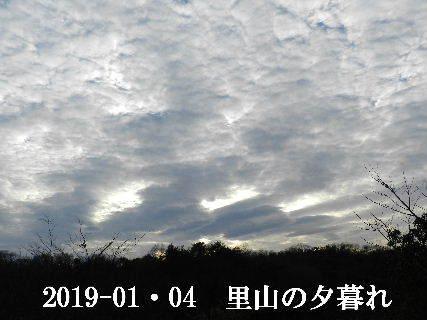 2019-01・04 今日の里山模様 (4).JPG