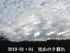 2019-01・04 今日の里山模様 (5).JPG